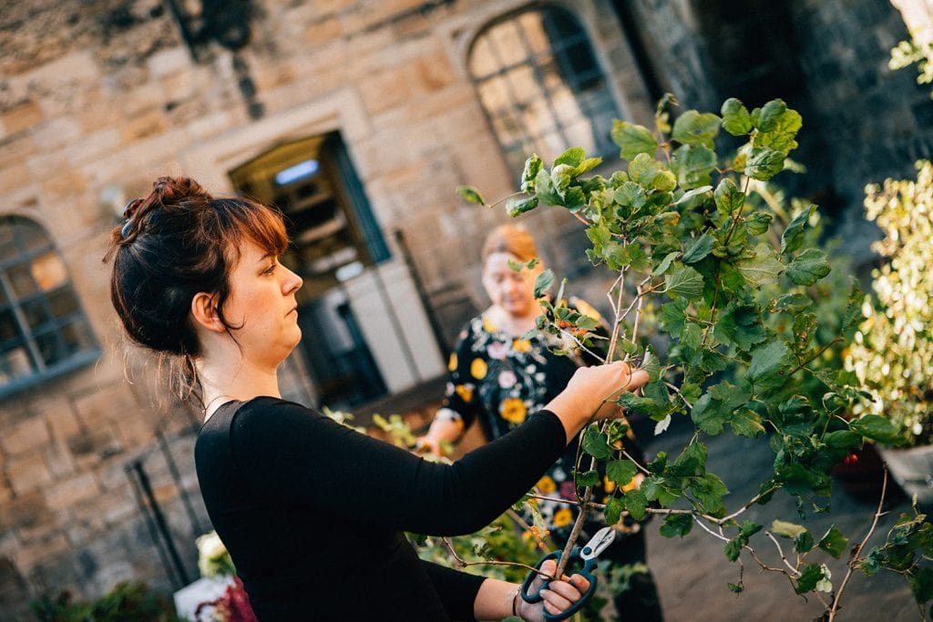 Northumbrian Flowers preparing foliage