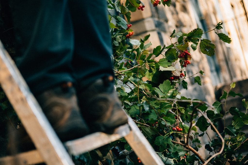 Work boots on a ladder in front of foliage and berries