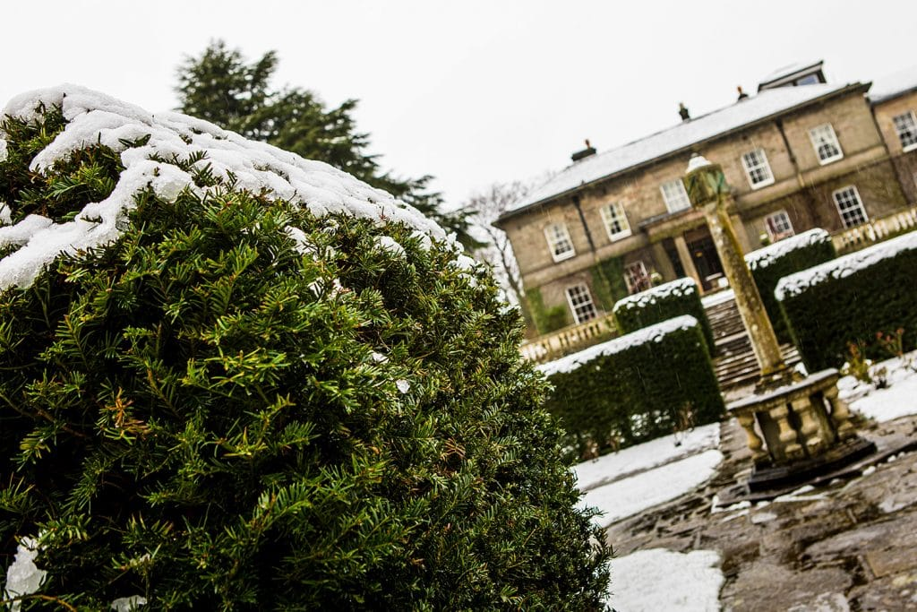 Melting snow on hedges at Doxford Hall